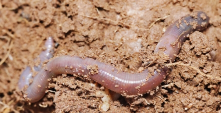 Worm Eating Bacteria, Fungi and Algae found in soil.